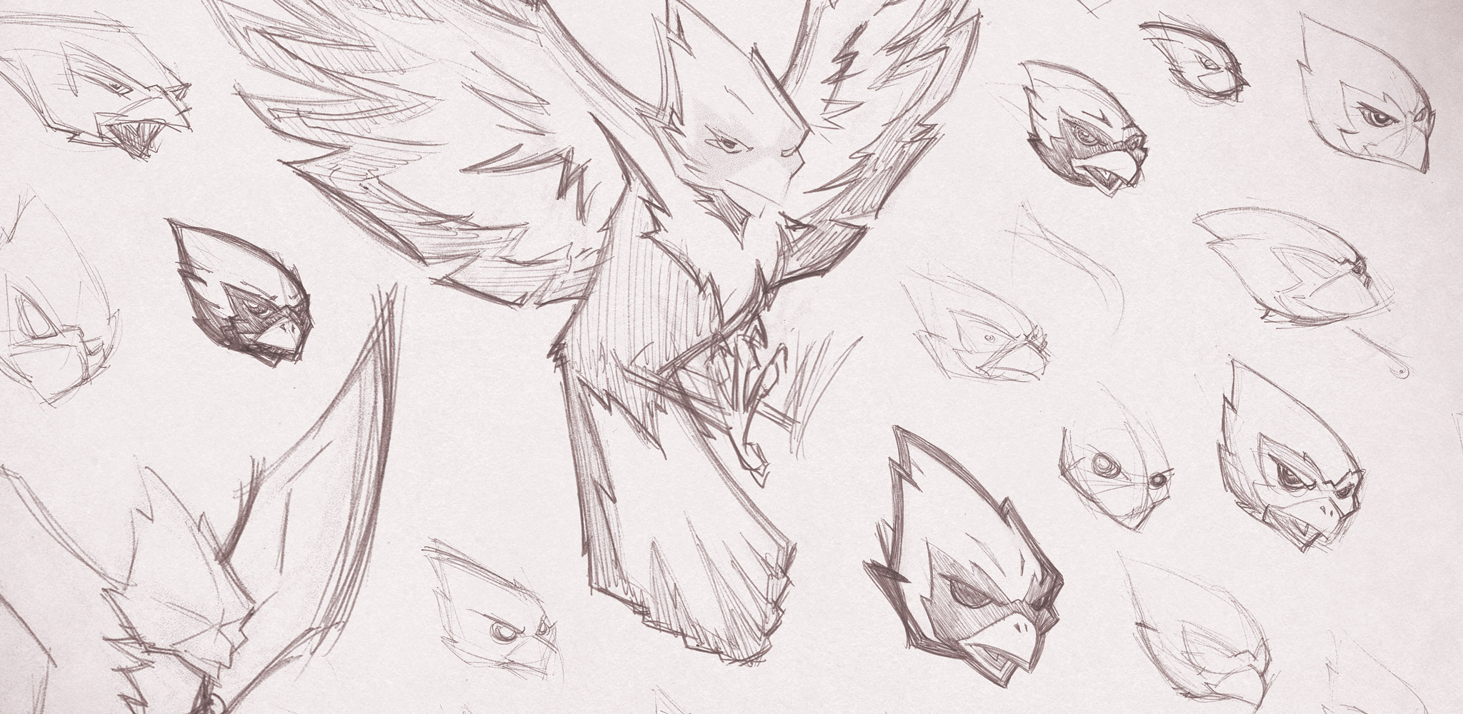 Raider Bird Sketches
